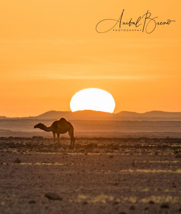 Atardecer en el desierto de Ennedi (Chad)