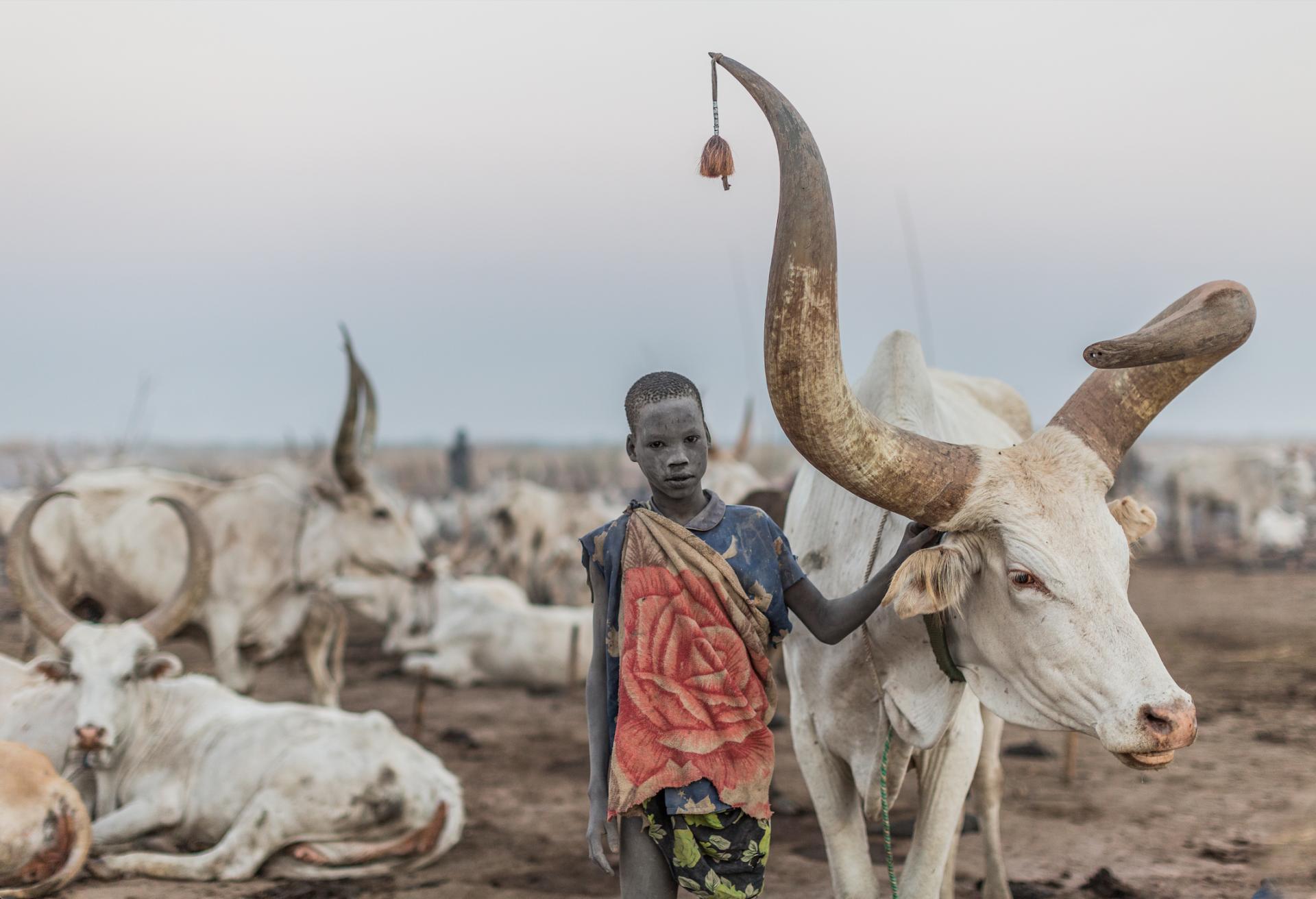 Niño mundari cuidando del ganado